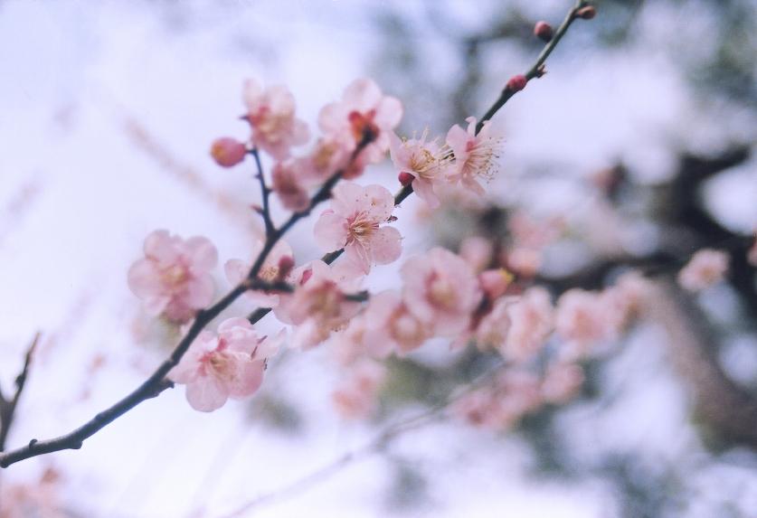 iStock_spring